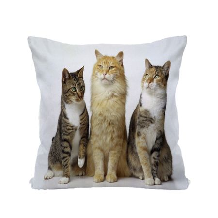 Almofada-de-Animais-30x30-Gatos