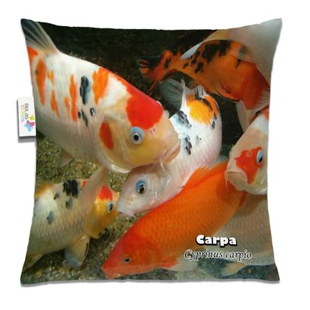 Almofada-Animal-30x30-Carpa